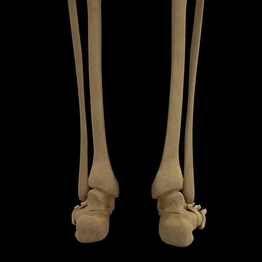 Anatomi Ben Fotben royalty-free 3d model - Preview no. 6