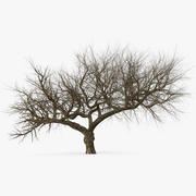 Alter Winterbaum 3d model