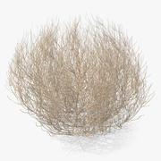 Desert Tumbleweed 3d model
