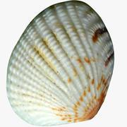 Conch Shell 3d model