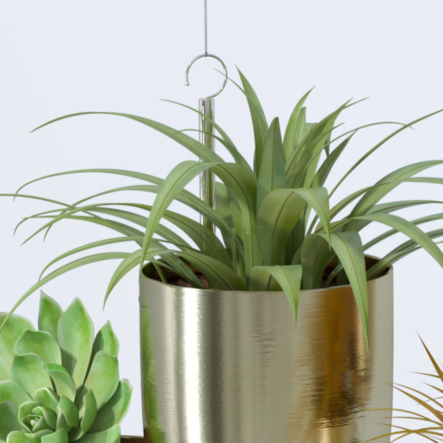 House plant indoor plant hanging metal pots royalty-free 3d model - Preview no. 7