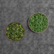 Mousse verte ronde décorative 3d model