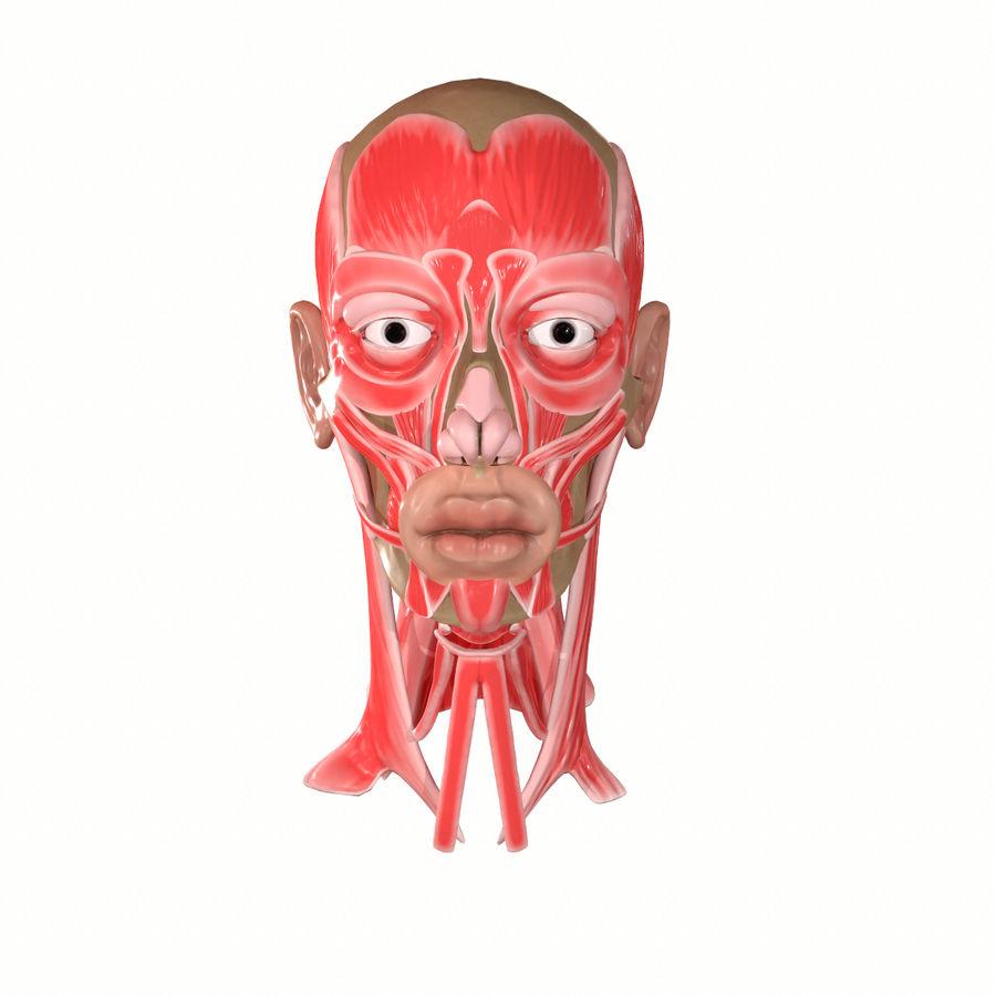 Hoofd gezicht spierstructuur anatomie royalty-free 3d model - Preview no. 2
