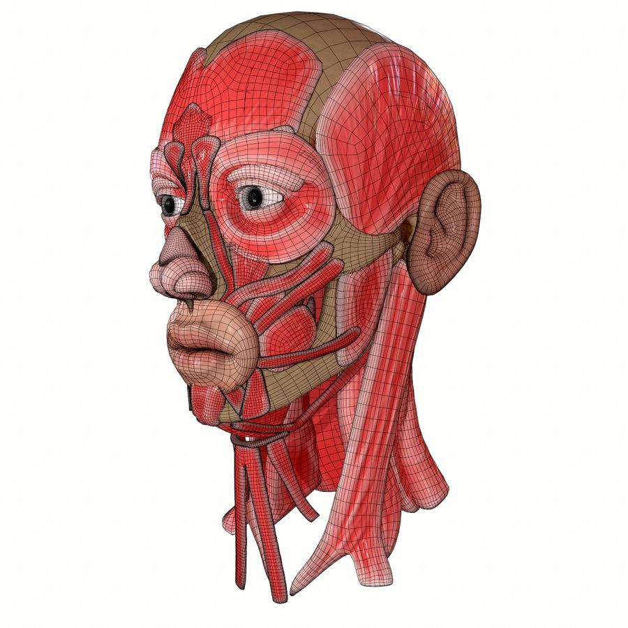 Hoofd gezicht spierstructuur anatomie royalty-free 3d model - Preview no. 17
