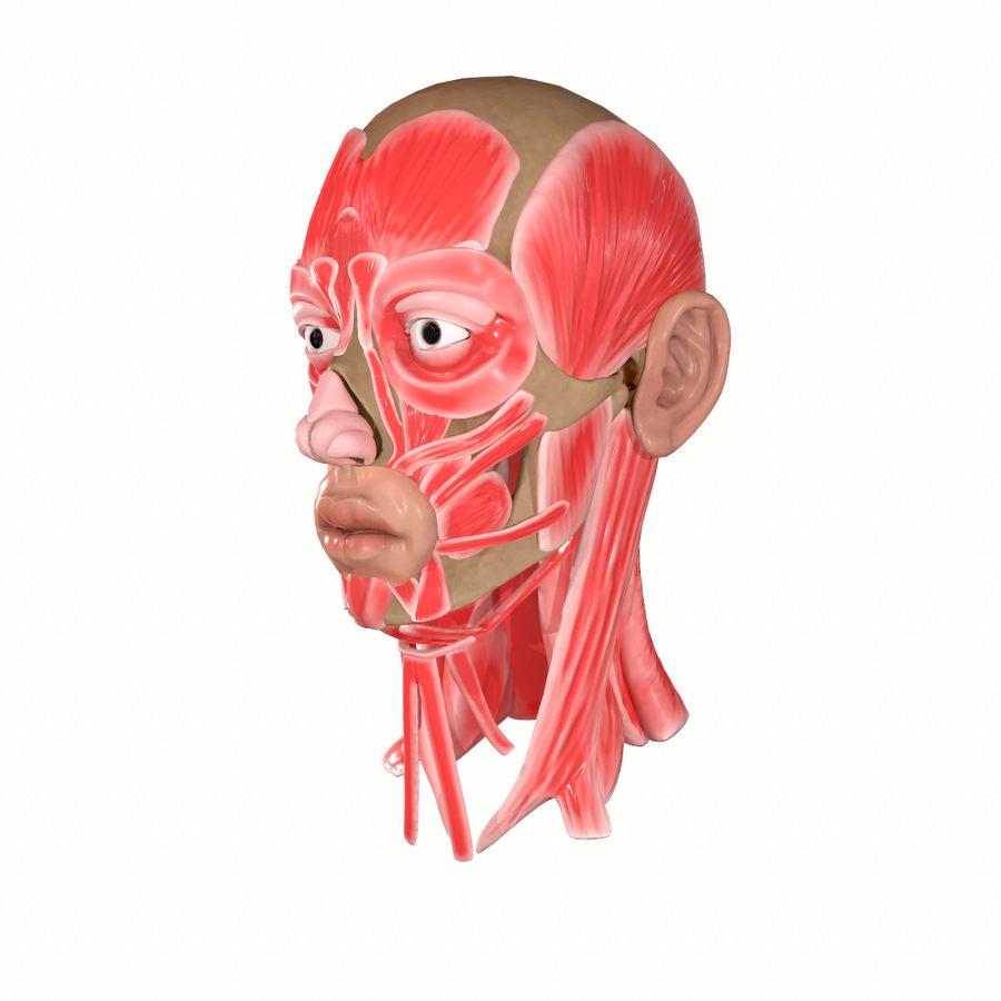 Hoofd gezicht spierstructuur anatomie royalty-free 3d model - Preview no. 3