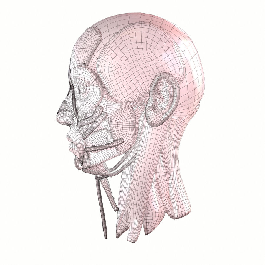 Hoofd gezicht spierstructuur anatomie royalty-free 3d model - Preview no. 20