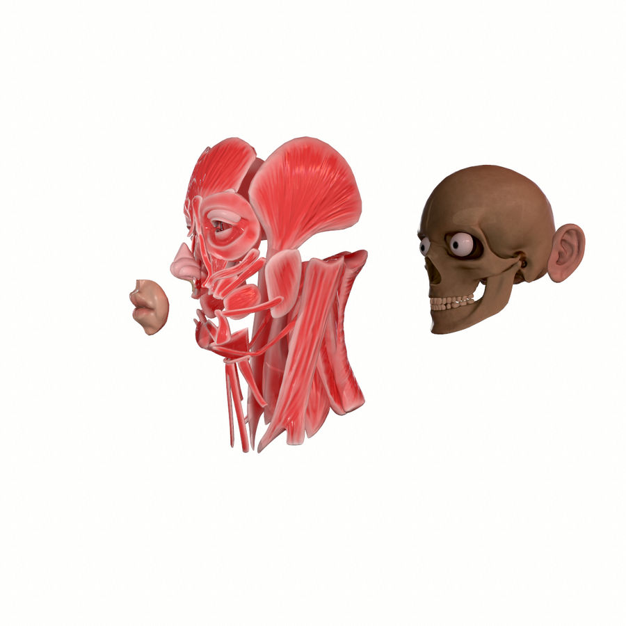 Hoofd gezicht spierstructuur anatomie royalty-free 3d model - Preview no. 4