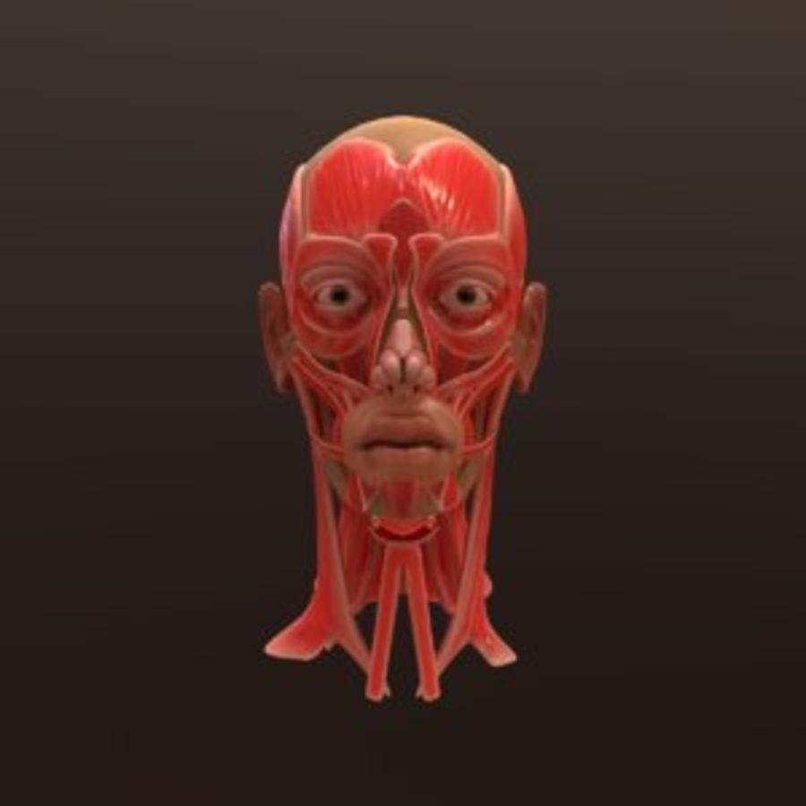 Hoofd gezicht spierstructuur anatomie royalty-free 3d model - Preview no. 1
