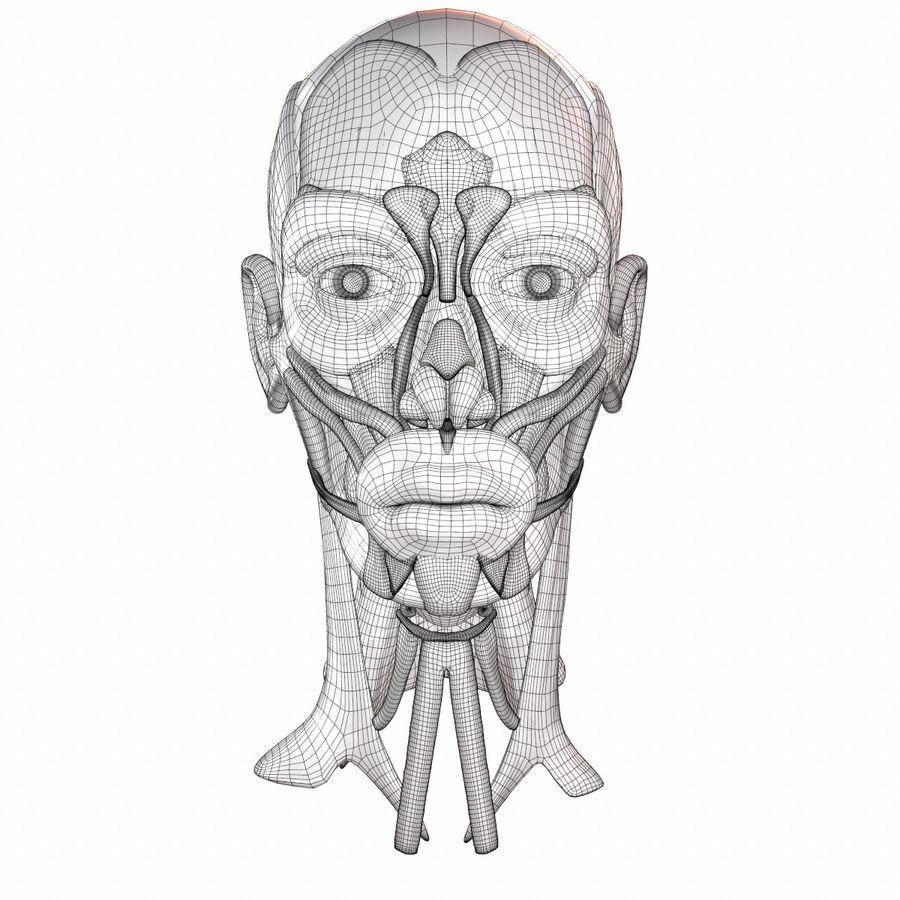 Hoofd gezicht spierstructuur anatomie royalty-free 3d model - Preview no. 19