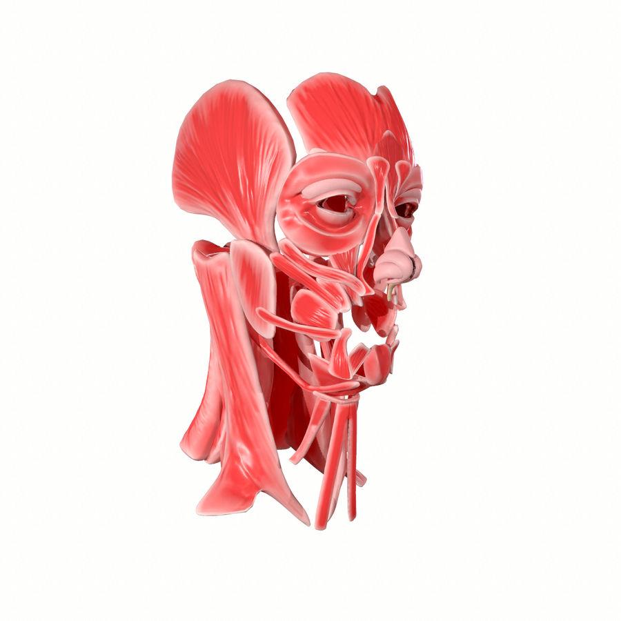 Hoofd gezicht spierstructuur anatomie royalty-free 3d model - Preview no. 5