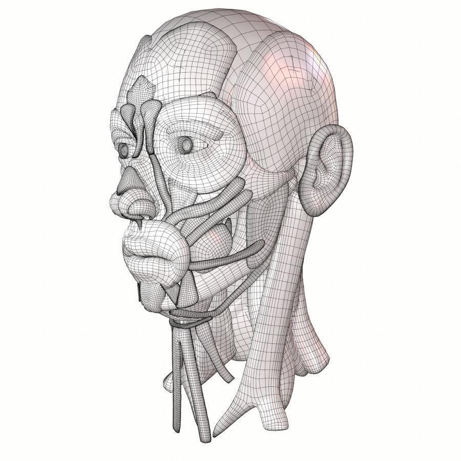 Hoofd gezicht spierstructuur anatomie royalty-free 3d model - Preview no. 18