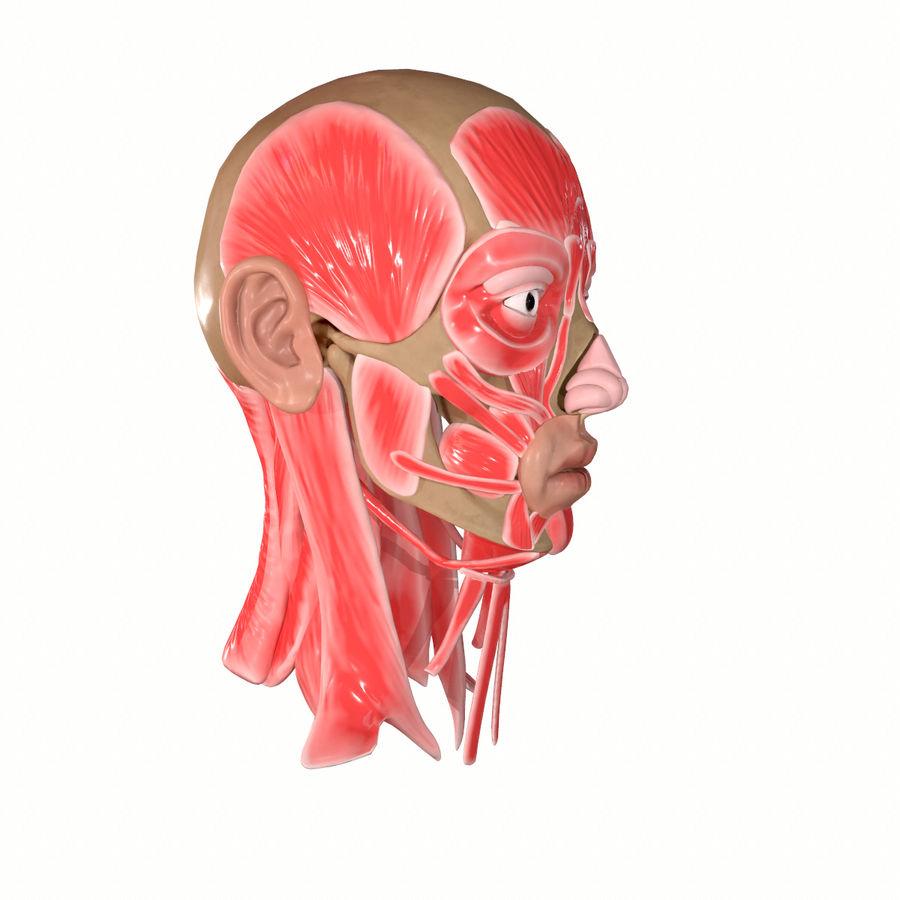 Hoofd gezicht spierstructuur anatomie royalty-free 3d model - Preview no. 12