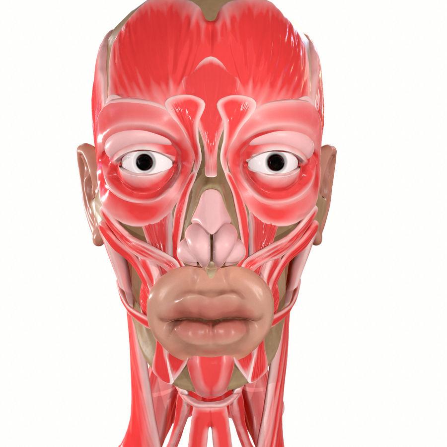 Hoofd gezicht spierstructuur anatomie royalty-free 3d model - Preview no. 11