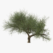 Olive Tree With Olives 3D Model 3d model