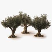 Анимированные фотореалистичные оливковые деревья 3d model