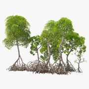 Arbuste de mangrove 3d model