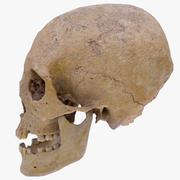 Echter menschlicher Schädel 3d model