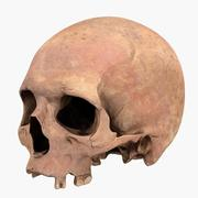 3D Real Human Skull 3d model