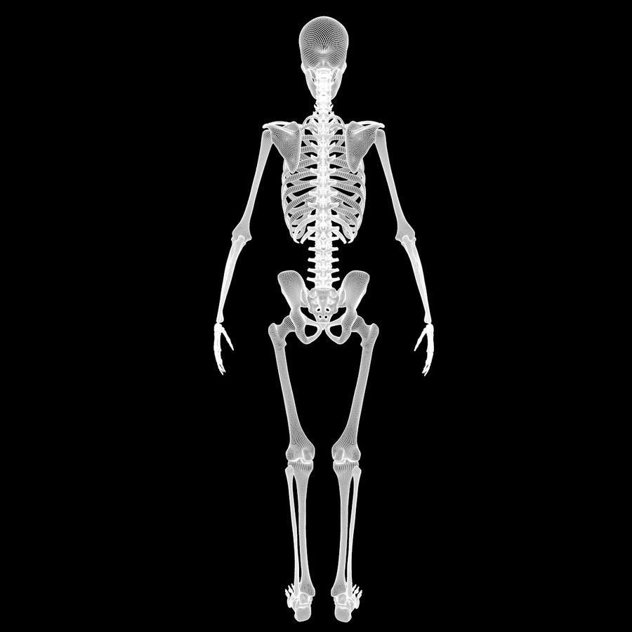 Анатомия скелета всего тела royalty-free 3d model - Preview no. 79