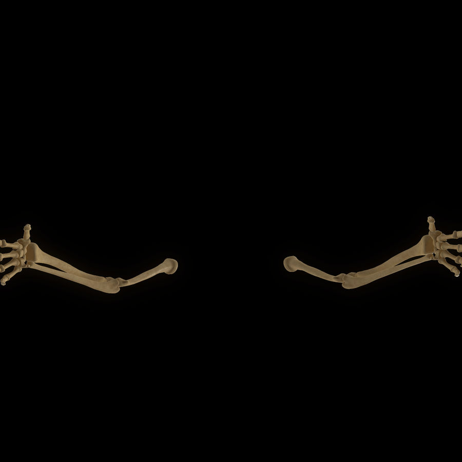 Torso Arm Spine Muscle Bone Anatomy royalty-free 3d model - Preview no. 56