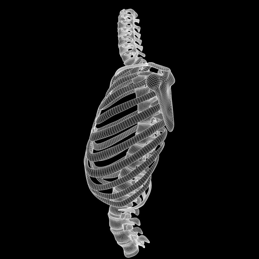 Torso Arm Spine Muscle Bone Anatomy royalty-free 3d model - Preview no. 63