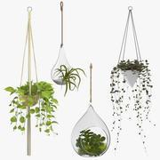 Wiszące rośliny domowe 3d model