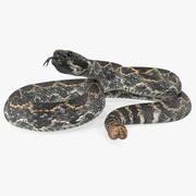 Dark Rattlesnake Modèle 3D 3d model