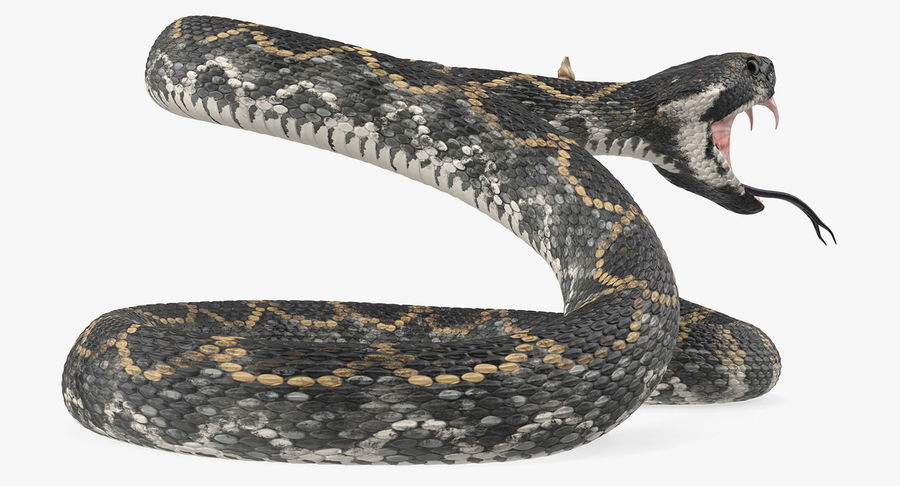 Dark Rattlesnake Attack Pose Modèle 3D royalty-free 3d model - Preview no. 6