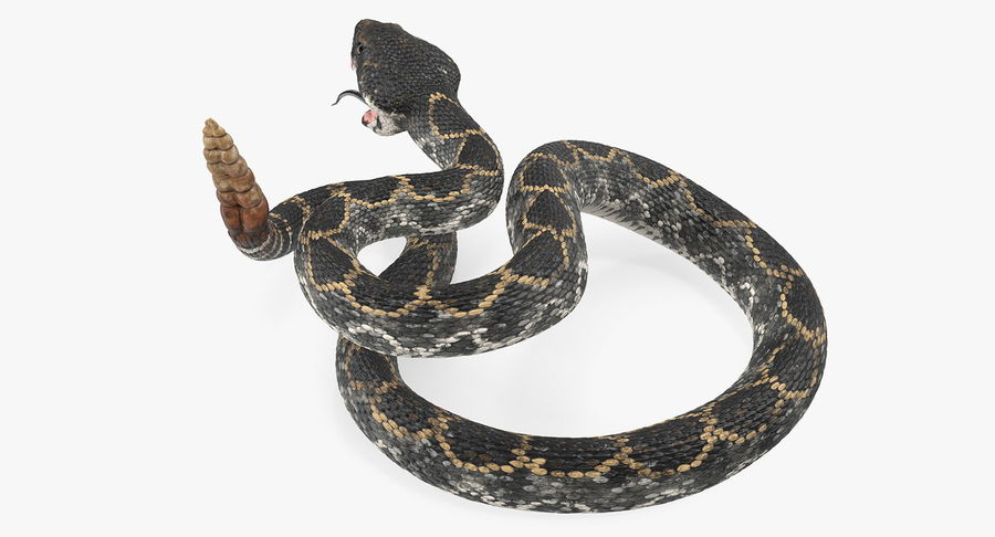 Dark Rattlesnake Attack Pose Modèle 3D royalty-free 3d model - Preview no. 7