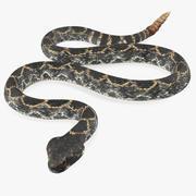 Dark Rattlesnake Crawling Pose 3d model