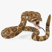 Light Rattlesnake Attack Pose 3d model