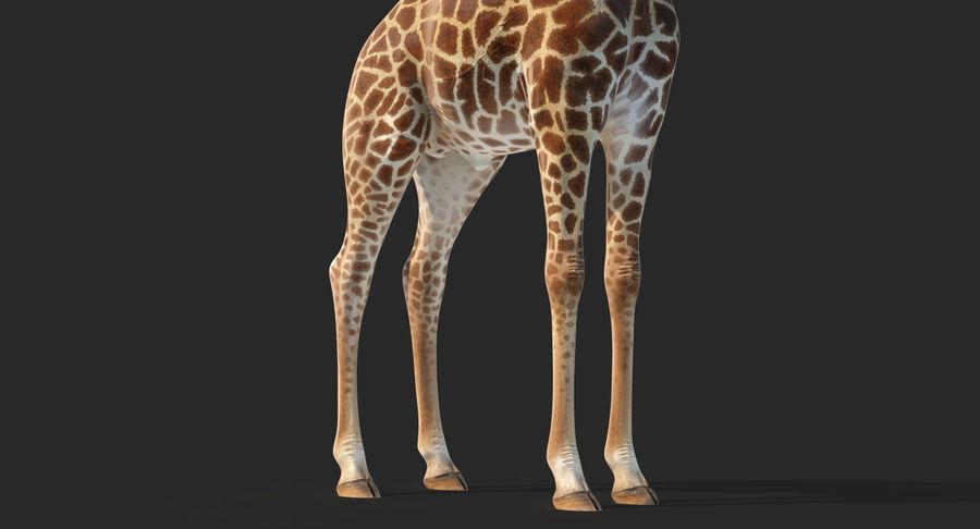 アフリカのキリン3Dモデル royalty-free 3d model - Preview no. 9