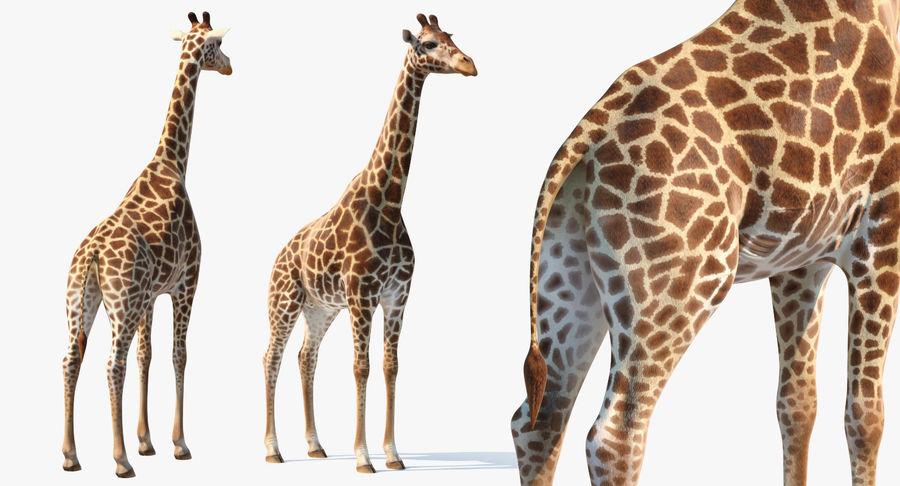 アフリカのキリン3Dモデル royalty-free 3d model - Preview no. 13