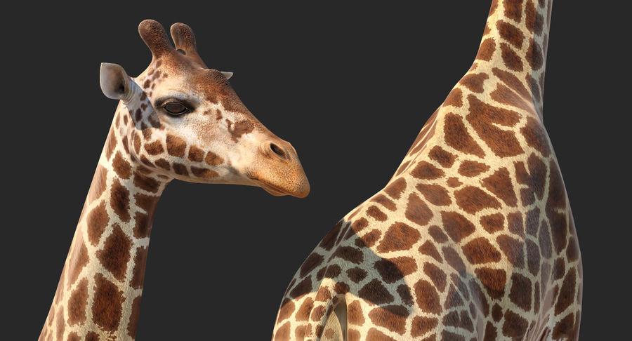 アフリカのキリン3Dモデル royalty-free 3d model - Preview no. 7