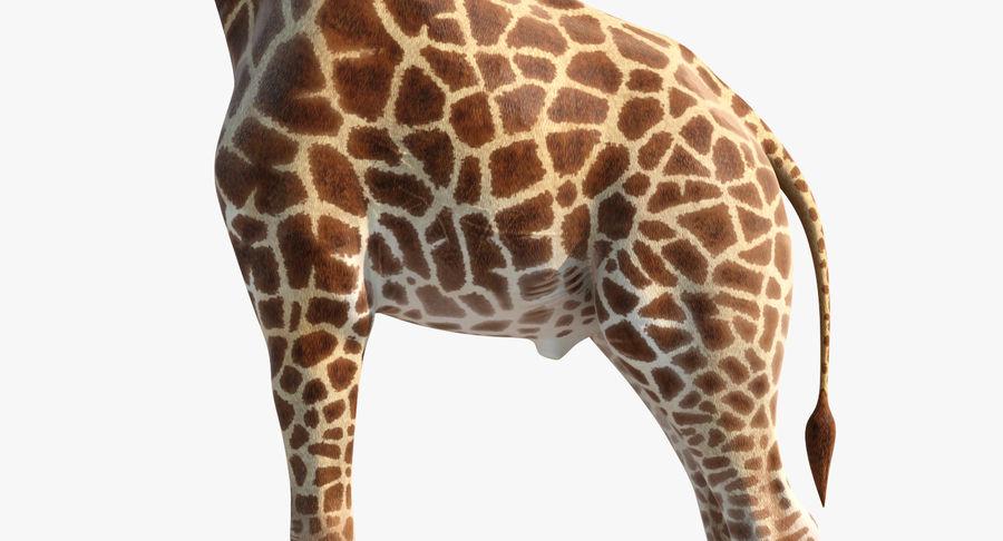 アフリカのキリン3Dモデル royalty-free 3d model - Preview no. 12