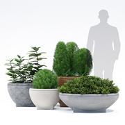 Rosa Planter 3d model