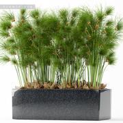 rośliny 170 3d model