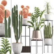 Collezione di piante di cactus esotici 4 3d model