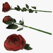 地面に単一の美しい赤いバラ 3d model