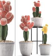 Коллекция экзотических кактусов 5 3d model