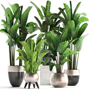 Exotic plants banana tree set 3d model