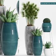 plants 175 3d model