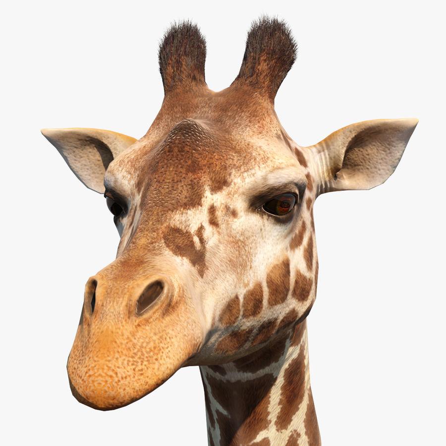 African Giraffe Fur royalty-free 3d model - Preview no. 1