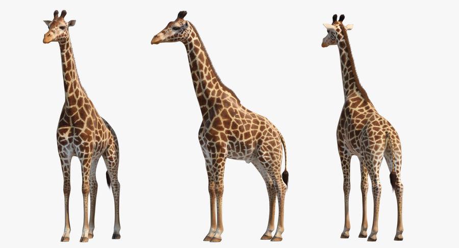 African Giraffe Fur royalty-free 3d model - Preview no. 3