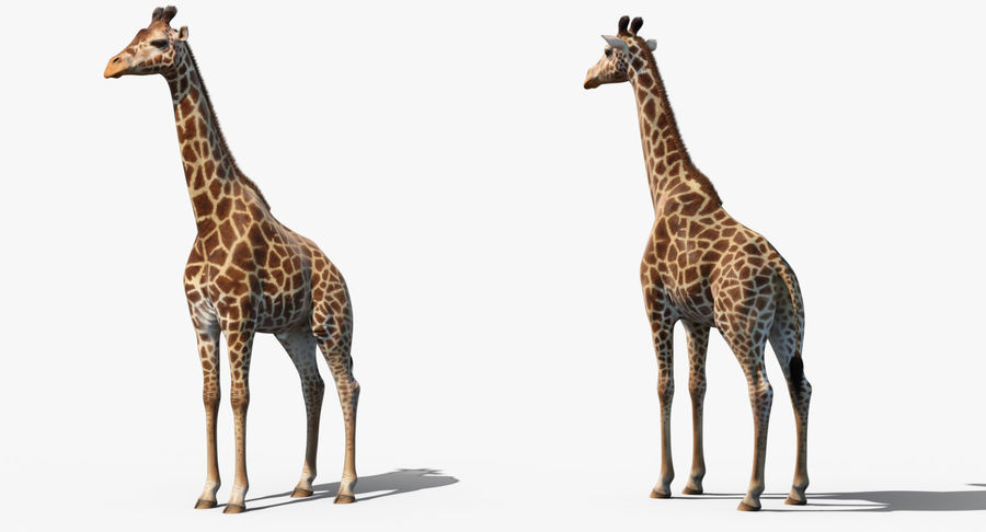 African Giraffe Fur royalty-free 3d model - Preview no. 9