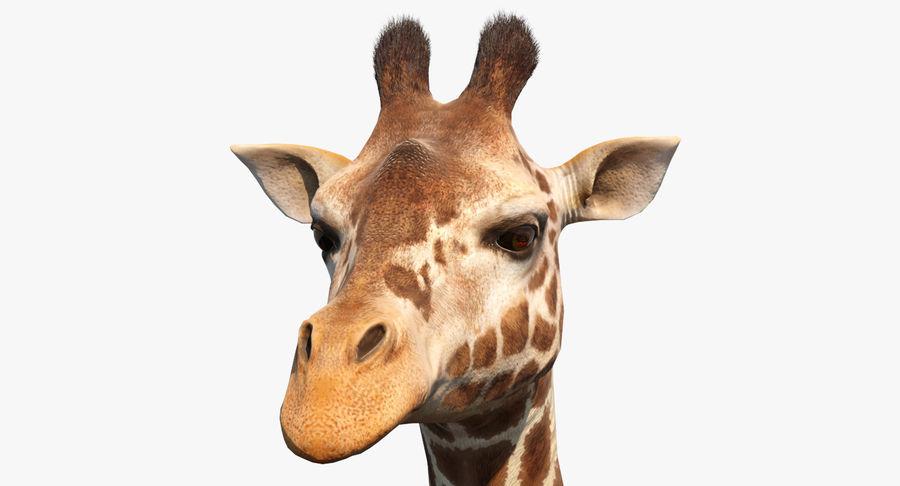 African Giraffe Fur royalty-free 3d model - Preview no. 2