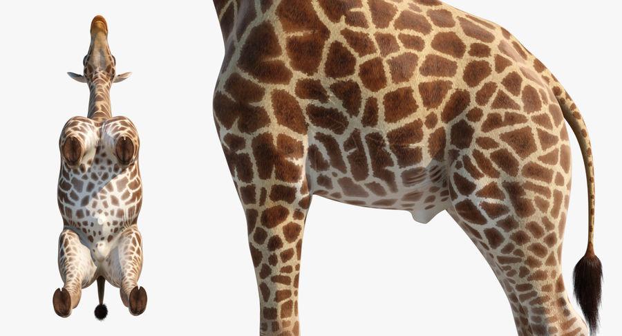 African Giraffe Fur royalty-free 3d model - Preview no. 15