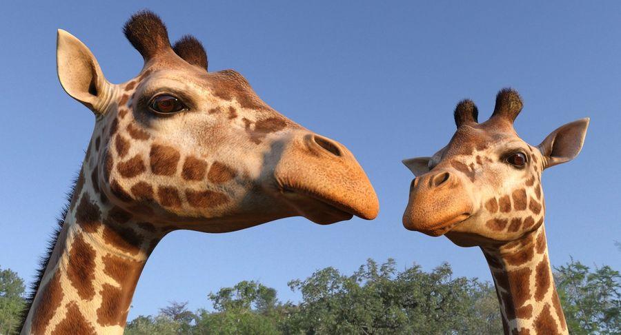 African Giraffe Fur royalty-free 3d model - Preview no. 6