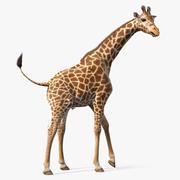 Afrika Zürafa Kürkü Arma 3d model
