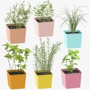 Indoor Herbs Collection 3d model